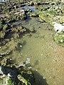 2018-01-17 Tide pools on Praia da Oura (2).JPG