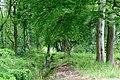 2019.05.25. Поход в лес Обербуш Ратинген. Чтец-09.jpg