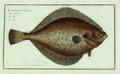 2019 NYR 17037 0016 000(bloch marcus elieser ichthyologie ou histoire naturelle generale et pa).jpg