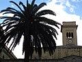 207 Piazza Duomo, palmera i campanar de la Catedral.jpg