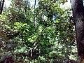 35-211-5004 Казавчинські скелі Лютинська 173.jpg