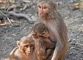 3 Monkey.jpg