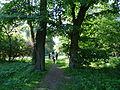 617683 A 683 Krakow Krzesławice Wankowicza 25 park w zespole dworsko parkowym 53.JPG