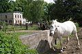 960viki Zespół pocysterski w Henrykowie. Foto Barbara Maliszewska.jpg
