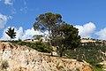 AL Ardah - panoramio.jpg
