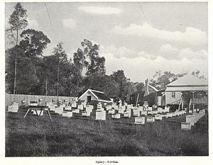 Goodna, Queensland - Apiary at Goodna ca. 1913.