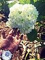 A flower in hand.jpg