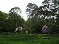 A glade in the Rhododendron Gardens, Plas Newydd - geograph.org.uk - 1294801.jpg