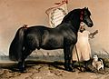 A healthy horse, representing the healthy effects of free tr Wellcome V0044781.jpg