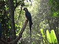 A natureza e o pássaro.JPG
