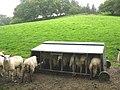 A sheep feeder at Bronasgellog - geograph.org.uk - 517685.jpg