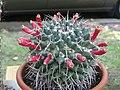 Ab plant 670.jpg