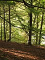Abbotsford woodland - geograph.org.uk - 604791.jpg