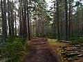 Abernethy Forest by Loch Garten - panoramio.jpg