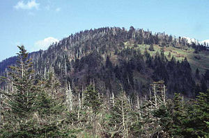 Clingmans Dome - Clingmans Dome, with Spruce-fir forest