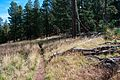 Abineau Trail is a steep 1,800 foot climb over two miles up the slopes of the San Francisco Peaks through Abineau Canyon. The trail meets the Waterline Trail at the top, which can be followed down to (21872094539).jpg