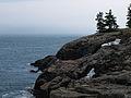 Acadia coast.jpg