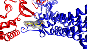 Argininosuccinate lyase - Image: Active site of ASL with argininosuccinate