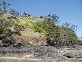 Agapanthus praecox orientalis Willd. (AM AK289253-5).jpg