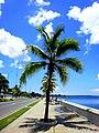 Al son de las palmeras del malecón de Cienfuegos - panoramio.jpg