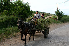 Albania cart loaded with hay.jpg