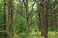 Algerine Swamp Natural Area (3) (14515893367).jpg