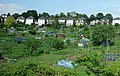 Allotments beside the railway - geograph.org.uk - 1434985.jpg