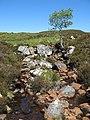 Allt Riabhach a' Chinn Tuill - geograph.org.uk - 1354066.jpg