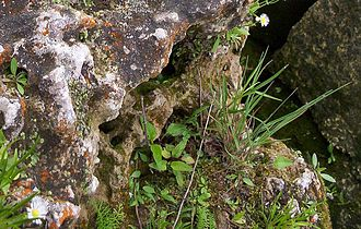 Alvar - Lichen, moss and grasses on limestone surface. Kelley's Island, Ohio in Lake Erie.