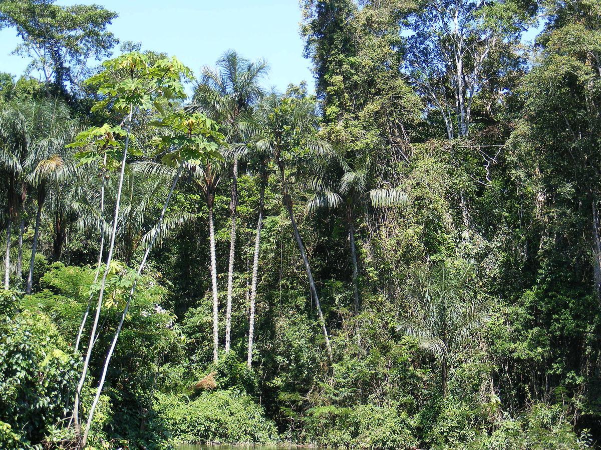 Llanura amazónica (Colombia) - Wikipedia, la enciclopedia libre
