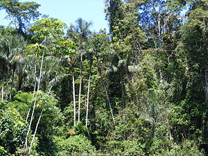Amazonian rainforest, upper Amazon basin, Lore...