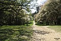 Amelanchier avenue (WGP) (16686976134).jpg