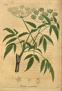 American medical botany (Pl. XII) (8182064034).jpg