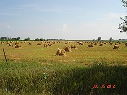 Amish Haystacks Fairbank, Iowa - panoramio.jpg