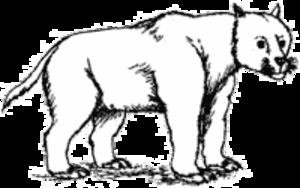 Cat gap - Image: Amphicyonidae illustration