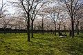 Amsterdamse Bos 04-2013 - panoramio (6).jpg