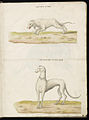Animal drawings collected by Felix Platter, p2 - (77).jpg