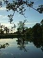 Ankerwyke Pond - geograph.org.uk - 807001.jpg