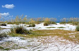 Image Result For Manatee County Administration