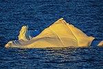 Another spectacular cruise northward along the NW coast of the Antarctic Peninsula. (25386709253).jpg