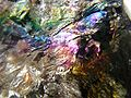 Anthracite coal (iridescent) - Kuperavage Mine, Pennsylvania, USA.jpg