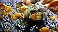 Aquarium1shashank.jpg