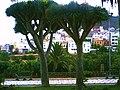 Arucas city park - panoramio.jpg