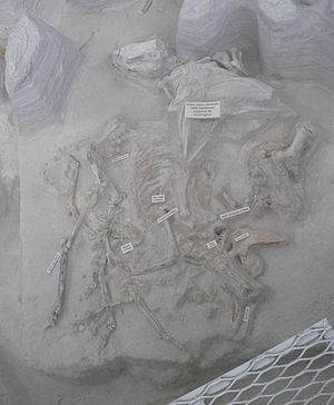 Neohipparion - Mare and foal at Ashfall Fossil Beds
