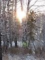 Asino, Tomskaya oblast', Russia - panoramio (5).jpg