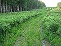 Asinovsky District, Tomsk Oblast, Russia - panoramio (279).jpg