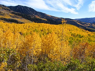 Fishlake National Forest - Fishlake National Forest