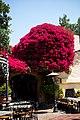 At Rancho del Zocalo - 8712338724.jpg