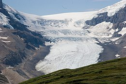 Athabasca glacier from a ridge near Wilcox pass (1976923629).jpg