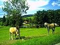 August Saint Peter Schwarzwald - Master Black Forest Photography 2014 - panoramio (12).jpg